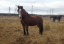 Похитителей лошадей в Подмосковье ищут по следам от обуви